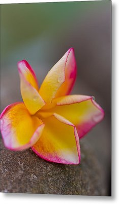 Metal Print featuring the photograph Flower Petals - Bali by Matthew Onheiber