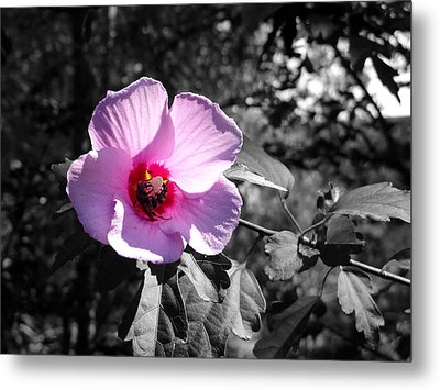 Flowering Metal Print by Tom DiFrancesca