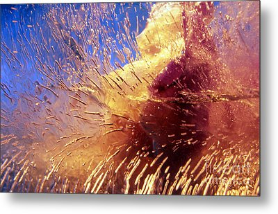 Metal Print featuring the photograph Flowers In Ice by Randi Grace Nilsberg