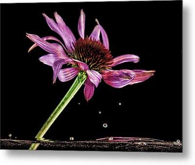 Flowing Flower 6 Metal Print by John Crothers