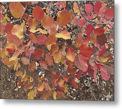 Flurry Of Colors Metal Print by James Rishel