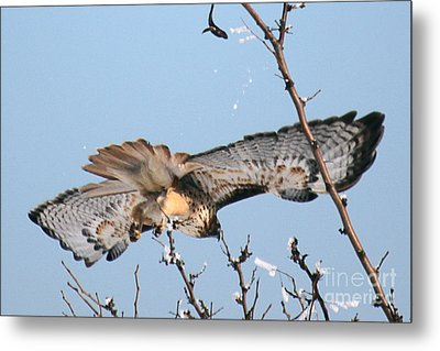 Flyby Metal Print by Bob Hislop