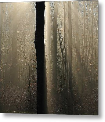 Foggy Mornin' Metal Print by Paul Noble