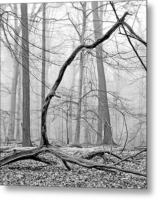 Foggy Morning Deciduous Forest Metal Print