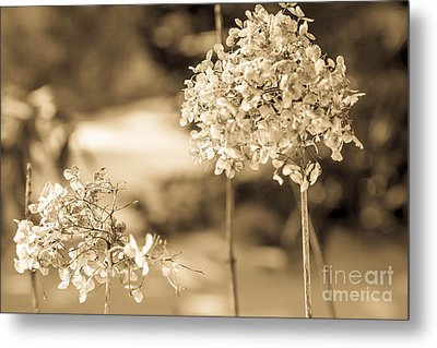 For You Metal Print by Sue OConnor