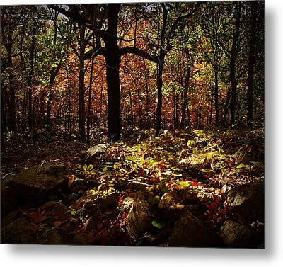Forest Illuminated Metal Print by Linda Unger