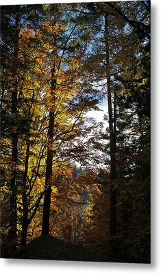 Forest In Autumn Light Metal Print by Bogdan M Nicolae