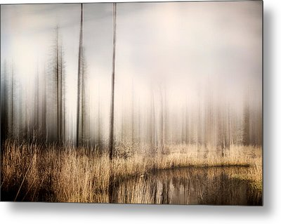 Forest Of Maine Metal Print by Gary Smith