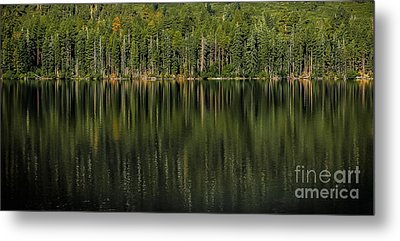 Forest Of Reflection Metal Print by Mitch Shindelbower