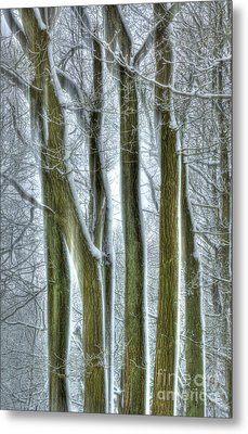 Forest Sentinels Metal Print by David Birchall