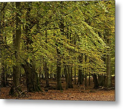 Metal Print featuring the photograph Forest Visitor by Inge Riis McDonald