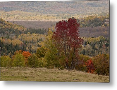 Metal Print featuring the photograph Fort Stewart Autumn Landscape by Jim Vance