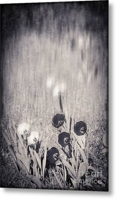 Four Red Tulips And Two Yellow Ones Metal Print by Silvia Ganora