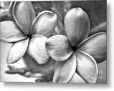 Frangipani In Black And White Metal Print by Peggy Hughes