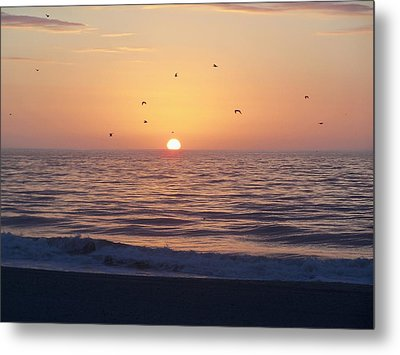 Metal Print featuring the photograph Free As A Bird by Victor Montgomery