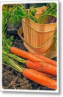 Fresh Garden Vegetables Metal Print by Edward Fielding