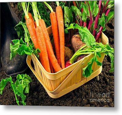 Fresh Picked Healthy Garden Vegetables Metal Print by Edward Fielding