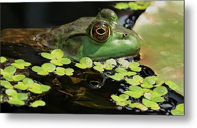 Frog Reflection Metal Print by Barbara S Nickerson