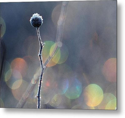 Metal Print featuring the photograph Frozen Orb by Paul Noble