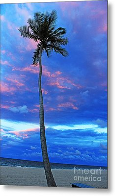Ft Lauderdale Palm Metal Print by Alison Tomich