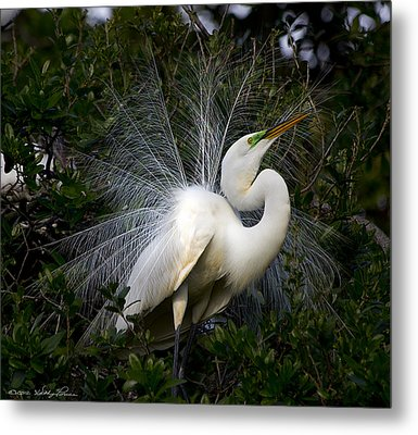 Metal Print featuring the photograph Geat Egret Mating Dance I by Kathy Ponce