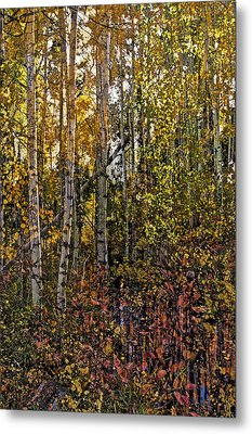 Ghosts Of A Quaking Aspen Metal Print
