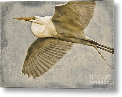Giant Beauty In Flight Metal Print by Deborah Benoit
