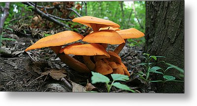 Metal Print featuring the photograph Giant Red Mushrooms by Ed Cilley