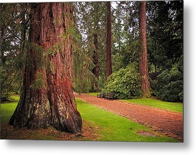 Giant Sequoia Or Redwood. Benmore Botanical Garden. Scotland Metal Print by Jenny Rainbow