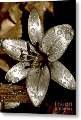 Metal Print featuring the photograph Gilded  Lilies 2 by Linda Bianic