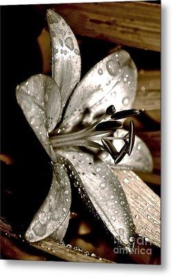Gilded Lilies 3 Metal Print