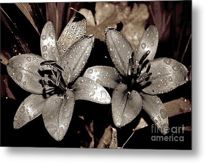 Metal Print featuring the photograph Gilded Lilies by Linda Bianic