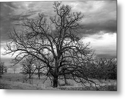 Metal Print featuring the photograph Gnarly Tree by Sennie Pierson