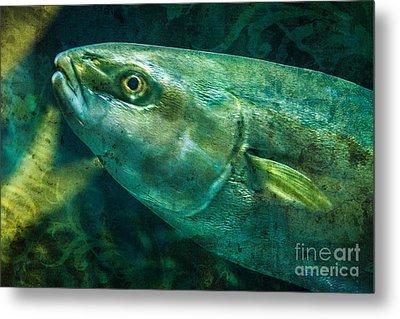 Go Fish 2 Metal Print by Pam Vick