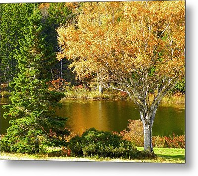 Metal Print featuring the photograph Golden Autumn by Gene Cyr