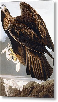 Golden Eagle Metal Print by John James Audubon