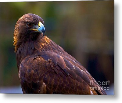 Golden Eagle Metal Print by Terry Horstman