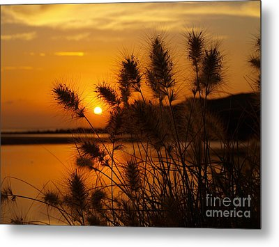 Metal Print featuring the photograph Golden Glow by Trena Mara