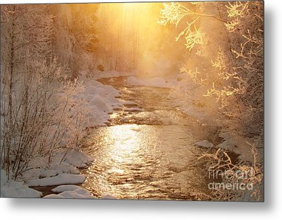 Golden Light Metal Print by Sylvia  Niklasson