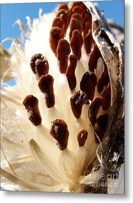 Gone To Seed Metal Print by Jane Ford