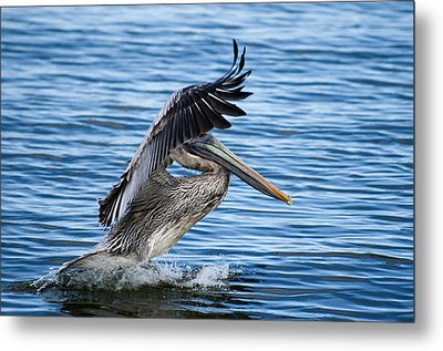Metal Print featuring the photograph Graceful Landing by Gregg Southard