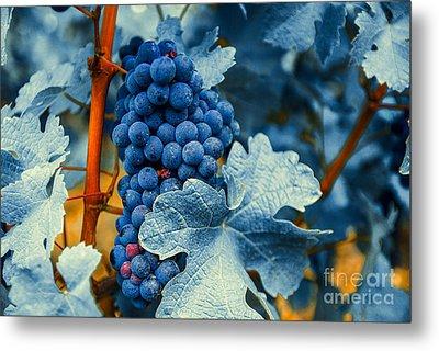 Grapes - Blue  Metal Print by Hannes Cmarits