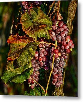 Grapes In The Morning Sun Metal Print by Martin Belan
