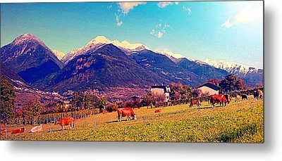 Metal Print featuring the photograph Grazing Cows 2 by Giuseppe Epifani