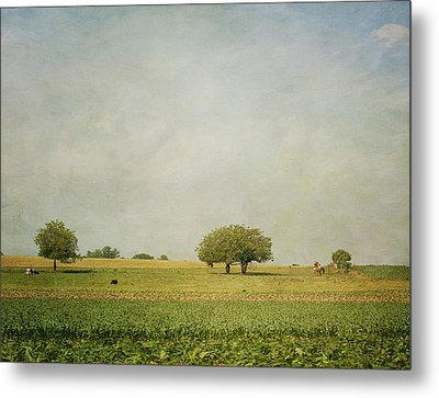Grazing Metal Print by Kim Hojnacki