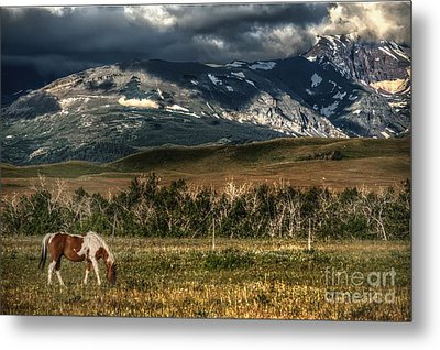 Grazing The Cutback Metal Print by The Stone Age