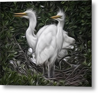 Great Egret Chicks Metal Print by Hazel Billingsley