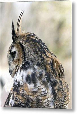 Great Horned Owl Metal Print by Dana Moyer