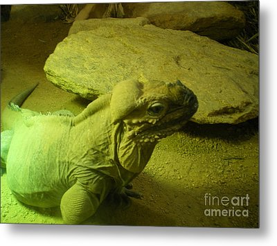 Green Iguana Metal Print by Ann Fellows