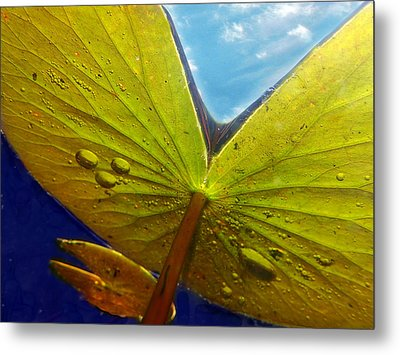 Metal Print featuring the photograph Green Lilly Pad by Lorella  Schoales